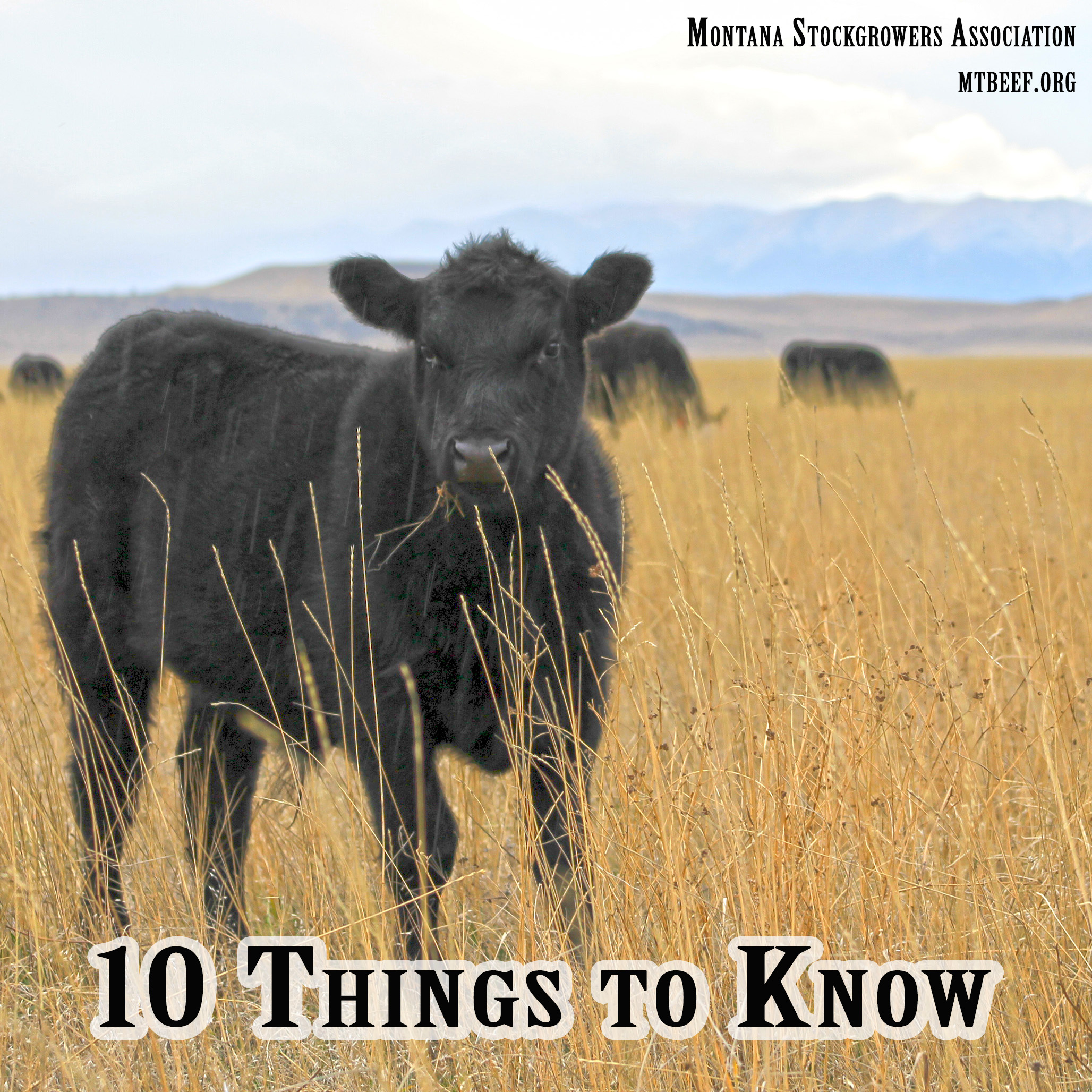Click this image to view all posts in the 30-day blogging series, 10 Things to Know About Cattle
